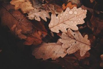 Aislamiento térmico para el otoño