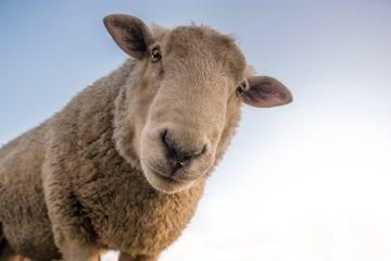 lana de roca y salud, características de la lana de roca